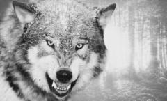 "Neuhaus, Nele ""Méchant loup"" (2014)"
