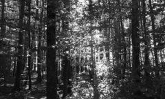 Hegland, Jean «Dans la forêt» (01.2017)